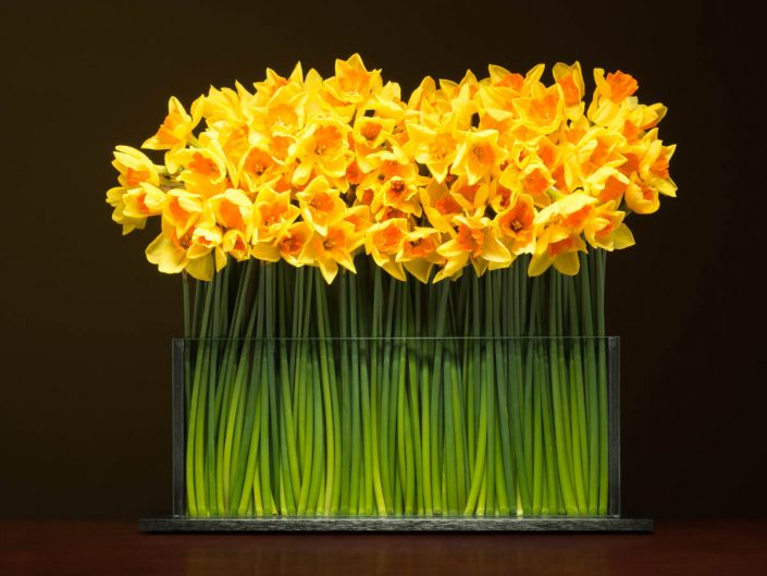 product photography of fresh yellow flowers with green stems in a flat modern metal and glass vase with dark brown background